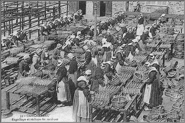 usines-sardines